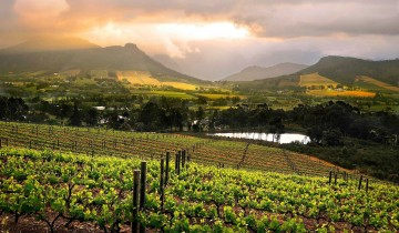 A picture of 7 Day Garden Route and Wine Combo Tour