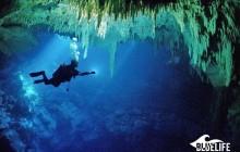 Cenotes: The Pit & Dos Ojos (2 Dives)