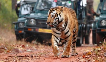 A picture of 8 Day Golden Triangle with Ranthambore Wildlife Tour