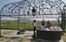 Small Group Douro Grape Harvest & Stomping Tour
