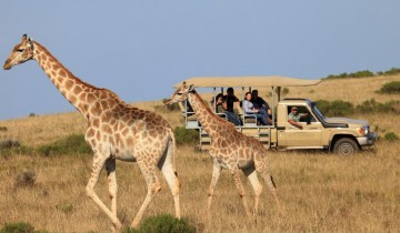 A picture of 3 Day Garden Route and Safari Tour