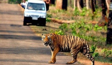 A picture of 11 Day Madhya Pradesh Wildlife Tour