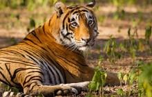 11 Day Madhya Pradesh Wildlife Tour