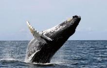 Whale Watching & Breakfast Cruise