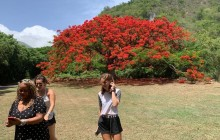 Rosevelt's Special Best of St. Kitts Excursion