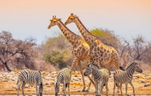 14 Day Delta/Vic Falls to Johannesburg Accommodate Adventure 2020