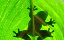 Classic Costa Rica Nature Trek - 8D/7N