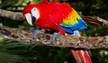A picture of Classic Costa Rica Nature Trek - 8D/7N