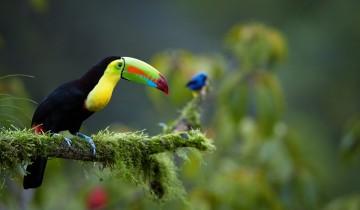 A picture of Classic Costa Rica Nature Trek - 8D/7N