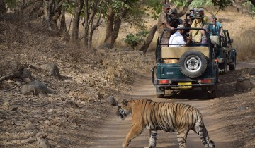 A picture of 2-Day Private Ranthambhore Tiger Safari Tour from Jaipur