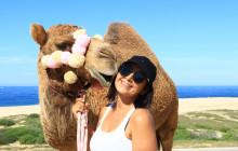 Los Cabos Camel Tour