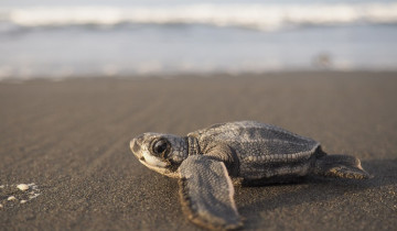 A picture of Tortuguero National Park Vacation Package - 2D/1N