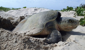 A picture of Tortuguero National Park Vacation Package - 3D/2N