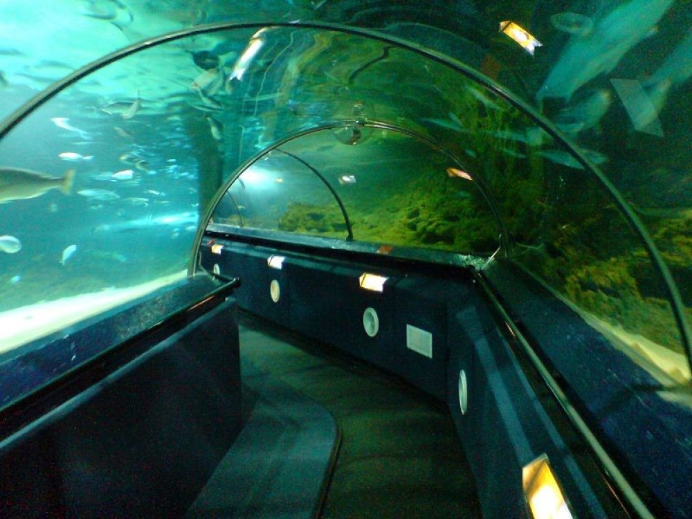 Kelly Tarlton's Sea Life Aquarium