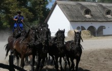 Puszta Art Tour + Horse Show + Lunch