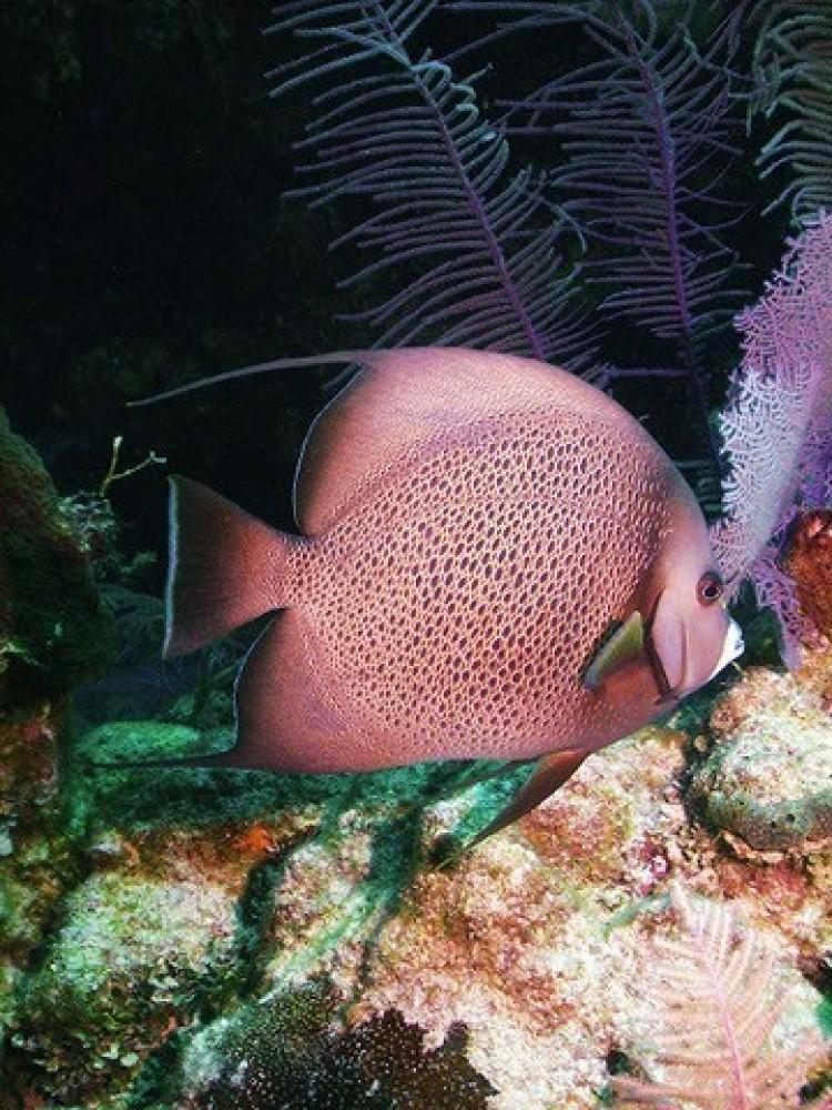 Snorkeling: Mexico Rocks And Tres Cocos