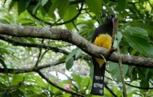 Birding in Belize