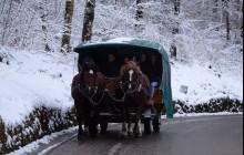 Winter Neuschwanstein & Linderhof Castle Tour By Bus