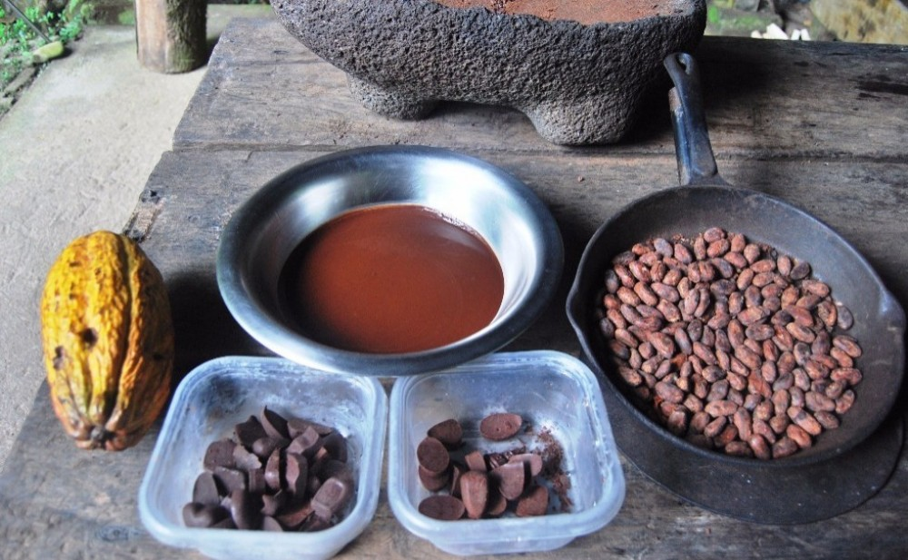 Tropical Rainforest and Chocolate Adventure from San Jose