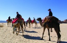 Sinai Desert Camel Trek from Matamir to Nawamis