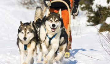 A picture of Alaska Winter Family Holiday 5D/4N
