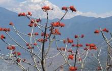 Pokhara Hike