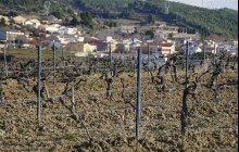 Semi Private Wines Of Catalunya: D.O. Penedès