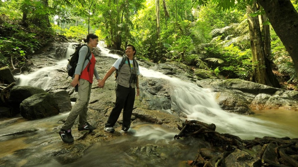 Private: A Glimpse of The Rainforest from Kuala Lumpur - Kuala Lumpur |  Project Expedition