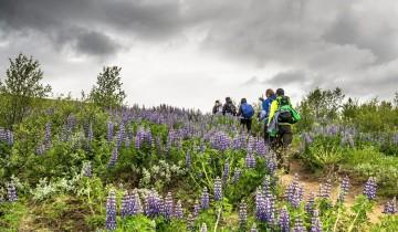 A picture of 6 Day Laugavegur & Fimmvörðuháls Trek (Huts)