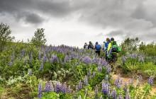 4 Day Laugavegur Hiking Tour (Huts)