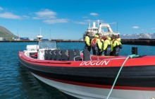 Speedboat Whale Watching from Dalvík