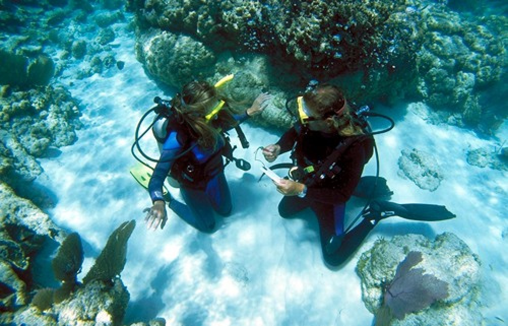 Discover Scuba Diving Xperience